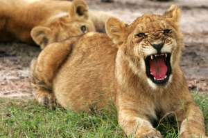 ** Now hear me roar!