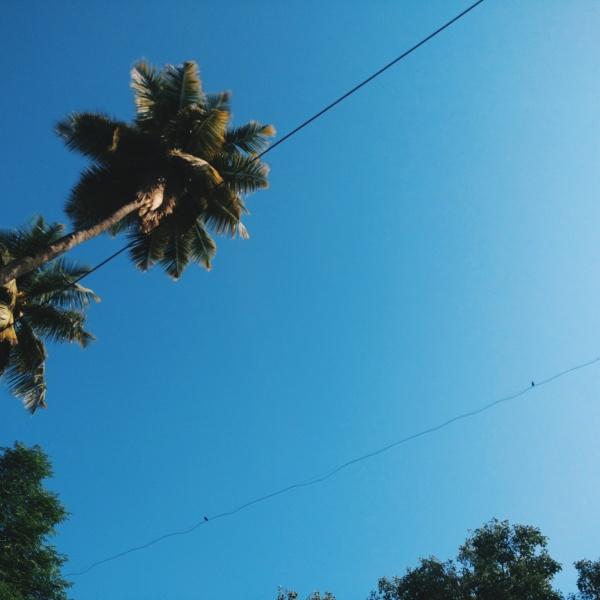 blue sky coconut tree blue skies poem poetry