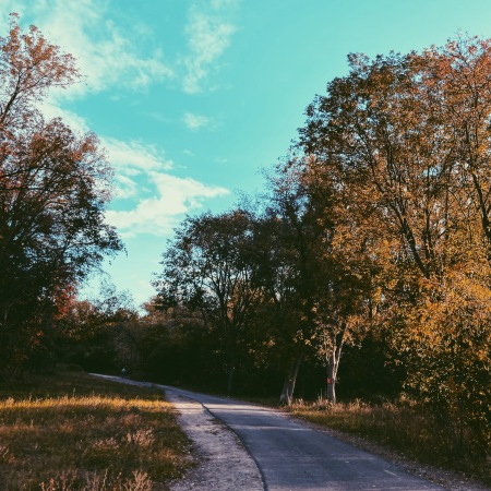 Autumn photography, Ontario Canada, Processed with VSCO with p5 preset